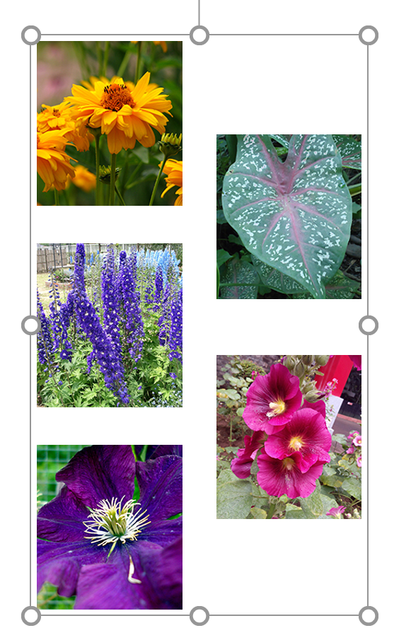 Grouped Images